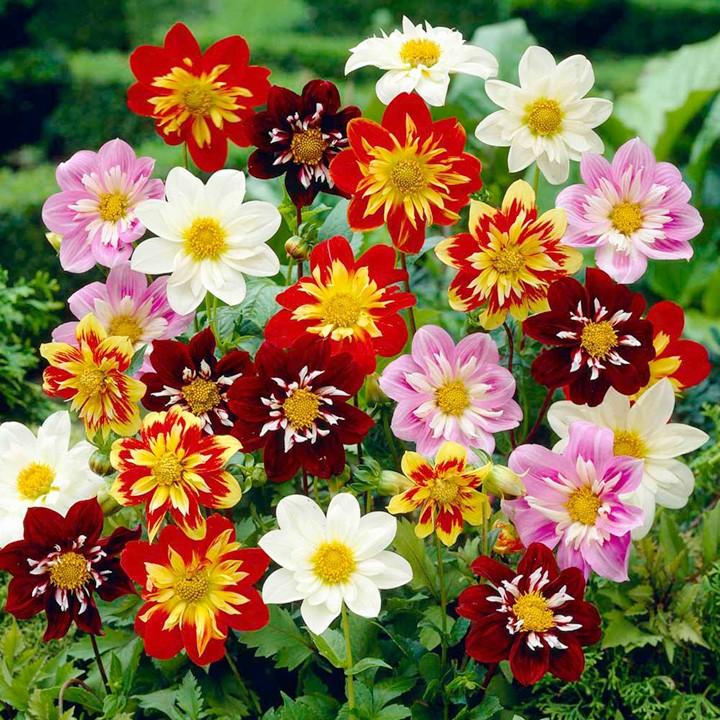 Картинки цветов веселые ребята