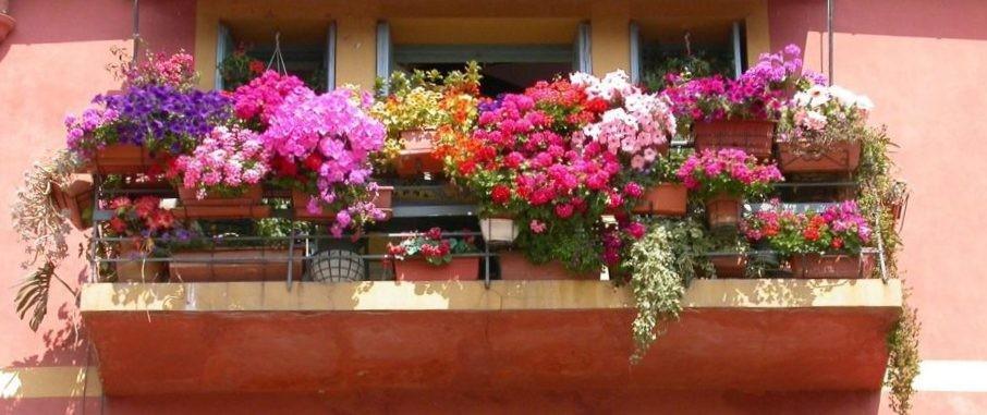 Купить семена смесь цветочная балконная в интернет-магазине .