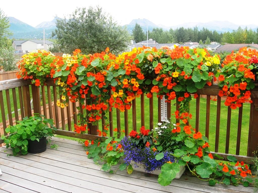 Быстрорастущие вьющиеся растения для забора: посадка и уход.